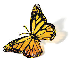 how to a pretty monarch butterfly yellow butterfly