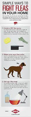 repulsif chien pour canapé canape inspirational repulsif chien canapé hd wallpaper