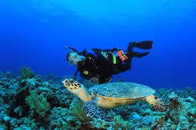 scuba diving vacations u0026 trips padi scuba diving training