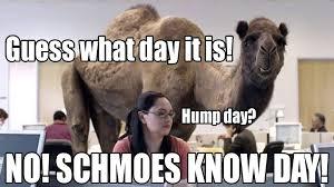 Hump Day Camel Meme - schmoeville s meme mondays schmoes know show recap 1 16 17