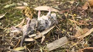 burying a pet in the backyard youtube