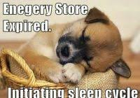 Goodnight Meme Funny - ideal goodnight meme cute cute and funny good night memes good