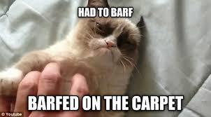 Success Cat Meme - livememe com grumpy cat