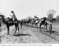 powerhouse museum u2013 a camel train beasts of burden in dry