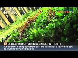 Indoor Vertical Gardens - largest indoor vertical garden in the city youtube