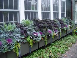 Window Box Decorations For Christmas Outdoor by Flowering Cabbage For Fall Fall Window Boxes Window And Cabbage