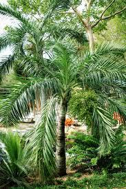 florida keys native plants visiting a garden in miami the martha stewart blog