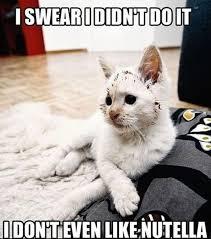Funny Animal Meme Pictures - don t like nutella funny animal meme