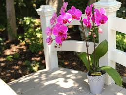 How To Care For Your by 200 Best Orchid Care Images On Pinterest Orchid Care Orchids