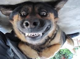Hyper Dog Meme - happy stuff very happy dog the joke box dogs pinterest