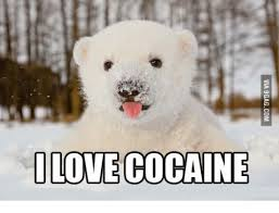Coke Bear Meme - 25 best memes about cocaine bear meme cocaine bear memes