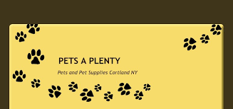 Creature Comforts Front Street Binghamton Pets A Plenty Location Cortland Ny