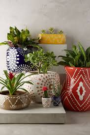 7 best groen images on pinterest indoor plants potted plants