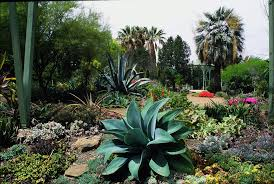 ca native plant nursery california native garden inspiration garden ideas pinterest
