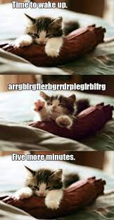 Sleepy Kitty Meme - cute cat memes google search kittens pinterest cat animal