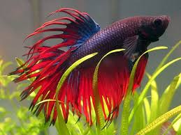 Aquascape Online Aquarium Fish Plants Online Delivery Available All India Aquarium