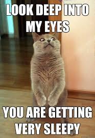 My Eyes Meme - look deep into my eyes cat meme cat planet cat planet