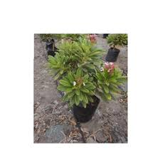 saplings of fruits palms and gardening tools wholesale