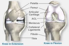 Knee Bony Anatomy Anatomy Of The Knee Baxter Regional Medical Center