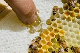 the secret lives of honeybees how honey gets made honey bees