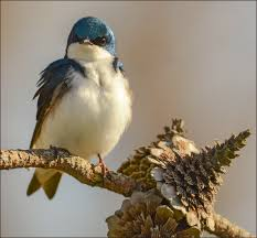 rare white bird sighting u2013 leucism in sparrows garden walk
