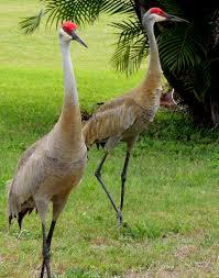 Florida Backyard Birds - flora u0026 fauna of florida part 2 yard birds and the corkscrew