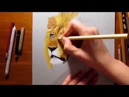 lion portrait drawing color pencil draw lion