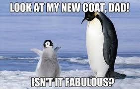 Cute Penguin Meme - funny penguin memes 20 pics bajiroo com page 14