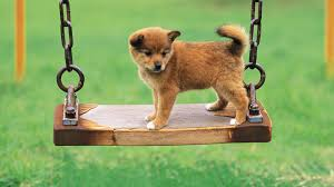 cute dog wallpapers cute pics of puppy dogs wallpaper
