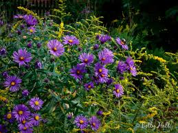 plants native to new england native plants fall betty hall photography