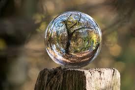 free photo glass autumn tree gnarled free image on