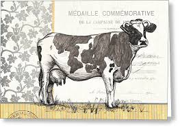 cow greeting cards black cow greeting cards america