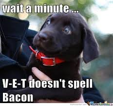 Dog Bacon Meme - things you spell instead of say v e t darwin dogs
