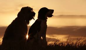 Are All Dogs Colour Blind Are Dogs Color Blind And How They See The World