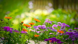 fantastic photos of gardens with flowers photos garden and