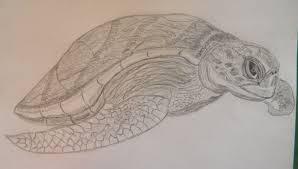 australian flatback sea turtle patsy u0027s creative corner