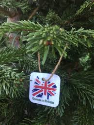 homegrown christmas trees grown in britain