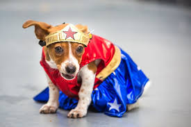 in costumes heart melting adoptable dogs in costumes phillyvoice