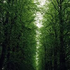 road between trees ipad wallpaper