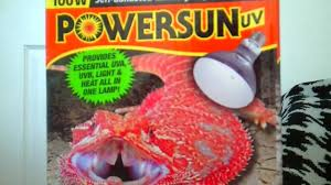 Reptile Heat Lamps Safety by Best Lighting Set Up For Bearded Dragons And Other Desert Reptiles