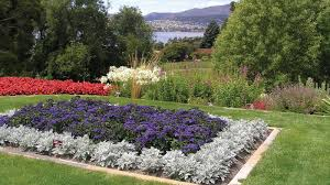 australian garden flowers flowers pictures view images of tasmania