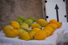etrog for sale reminiscing on sukkot set apart