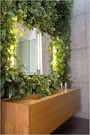 the 25 best indoor climbing plants ideas on pinterest window