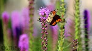 summer flowers that attract butterflies youtube