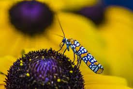 enjoy a variety of food thank a pollinator