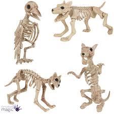 halloween dog cat rat bird skeleton decoration animal bones prop