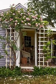 new dawn roses from trellis to vase on cape cod gardenista