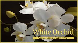 White Orchid Flower 10 Best Funeral Flowers Ultimate Guide Love Lives On