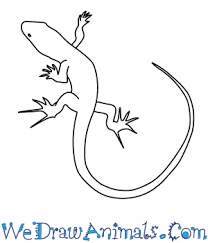 How To Draw A Bed How To Draw A Bedriaga U0027s Rock Lizard