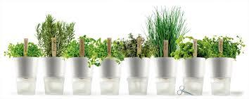 Eva Vase Vase Eva Solo Self Watering Herb Pot Relaxtribe